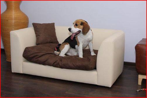 Sofas para perros exclusivos y personalizados for Sofa ideal cordoba
