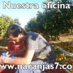Naranjas y mandarinas tienda online
