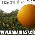 naranjas calidad y sabor